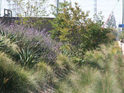 Southern California Edison Sustainable Landscape Project Villa Park